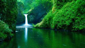 24685-nature-greenish